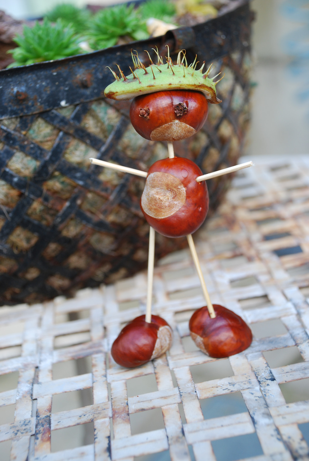 conkers and toothpicks...