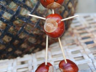 Sweet chestnut vs horse chestnut?