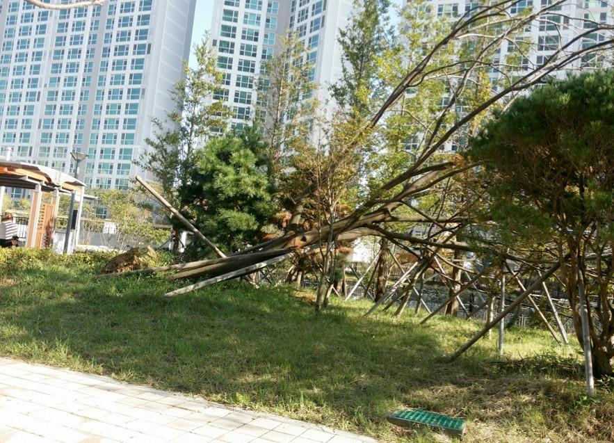 台風18号の通過で釜山では大きな被害が発生。
