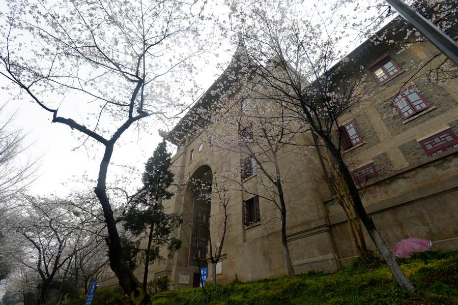 「老斎舎」の周りの桜並木