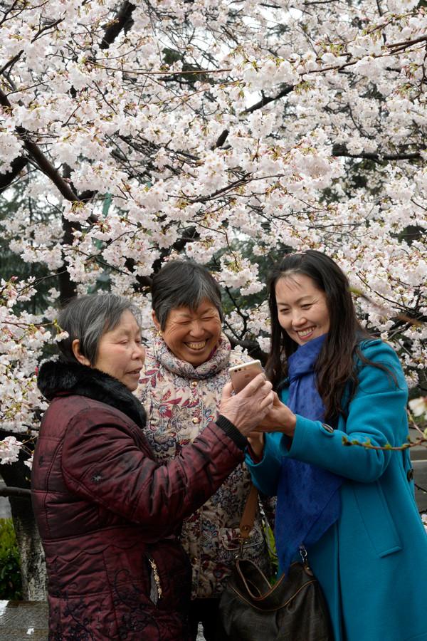武漢大学の桜を楽しむ中国人観光客