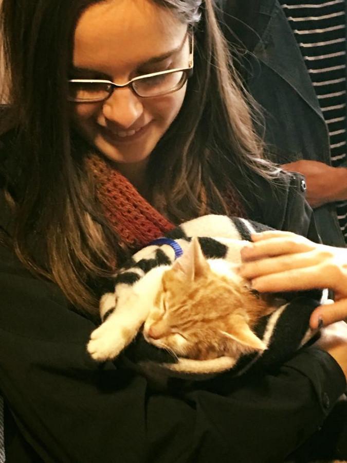 学生は皆、犬猫にメロメロ。大学によってはセラピー犬を招くところもある。 © VUWSA