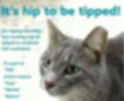 cat 5.jpg