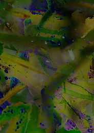 You, Copiphora gorgonensis MICHAELBRAILEY & Callum Coomber (2020), 60'