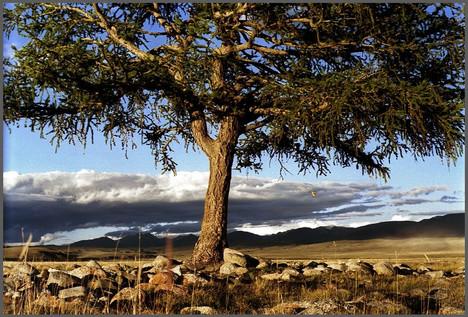 Дерево Юстыда с птицей. Окраина Чуйской степи. Горный Алтай