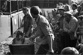 Кормление зверей в передвижном зверинце. Новокузнецк. 21.07.1983