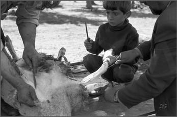Одна овца и три ножа