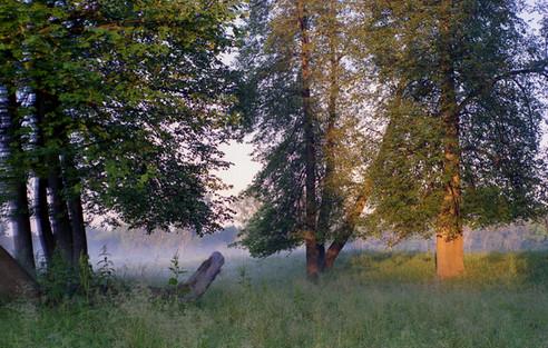Утренний туман на реке Меша. Россия. 13.07.2002