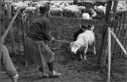 Возвращение в стадо блудной овцы