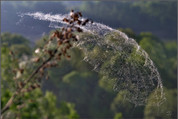Парашют для паука. Долина реки Томи. 29.05.2009