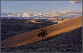 Одинокое дерево в верховьях Барбургазы. Горный Алтай