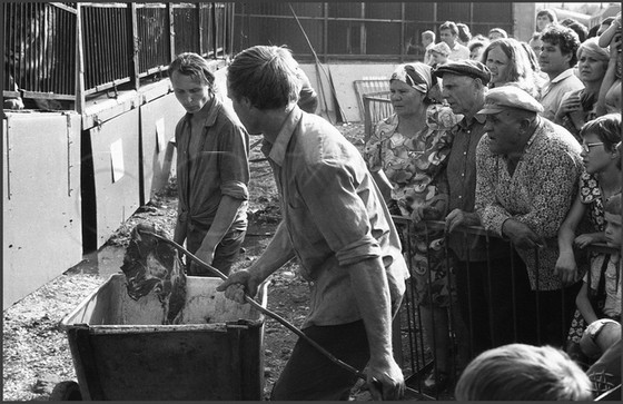 Кормление зверей в передвижном зверинце. Новокузнецк. 21.07. 1983