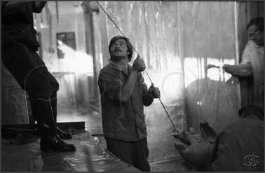 Убойный цех в селе Кругленьком. Забой свиней к празднику. 29.07.1982.