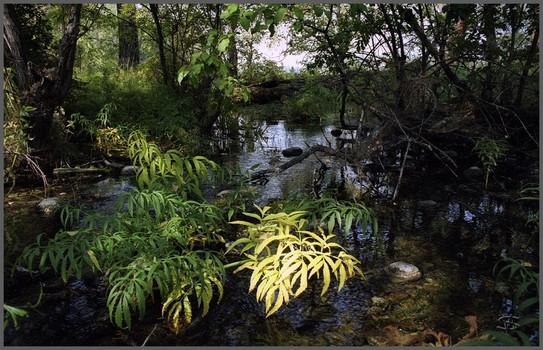 Исток ручья из Зеленого озера. Лист.  Тоджа. Тыва. 3.09.2001