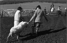 Овца, отобранная на заклание