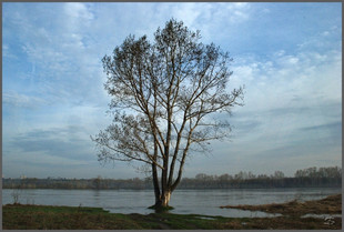 Весеннее половодье на реке Томи. Последний день одинокого тополя. 3.05.2009