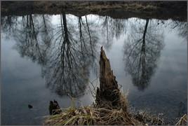 Весна. Старица реки Томи. Новокузнецк. 24.04.2009