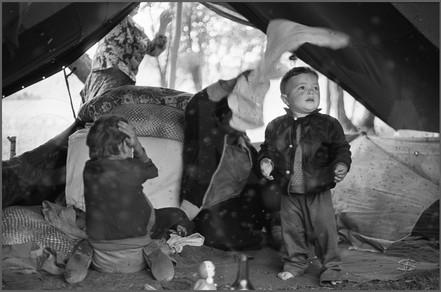 Мухи в палатке.jpg