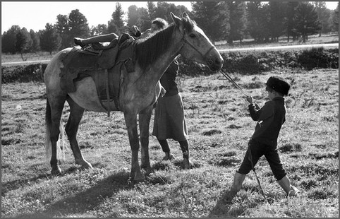 Попытка сдвинуть лошадь