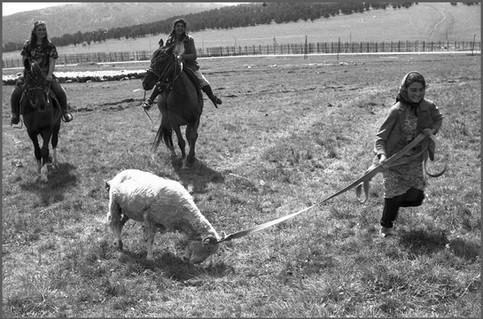 Перевод овцы из одной отары в другую