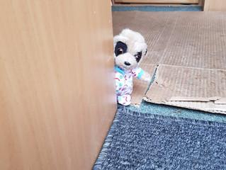 Bubba Oleg hides.