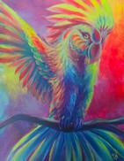 Kendra Macaw