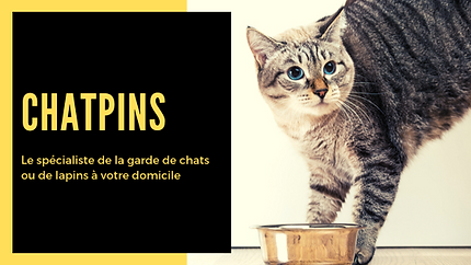 chatpins (4).png