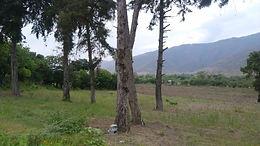 4 Manzanas de terreno en San Jeronimo BV