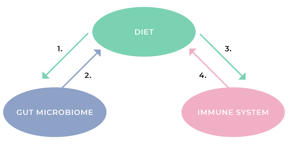 Diet, Gut Microbiome and Immunity System Link Diagram, Good Gut Health