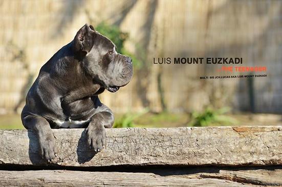 Our little Luis! ❤️ _migueldeheeckeren _