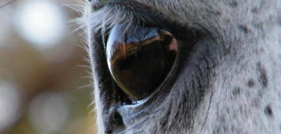 Wranglers Eye