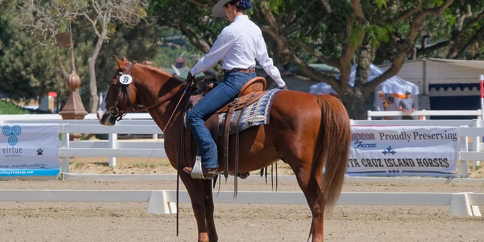 """""""No Bull"""" Working Equitation Level 1/Intro Schooling Show #1"""