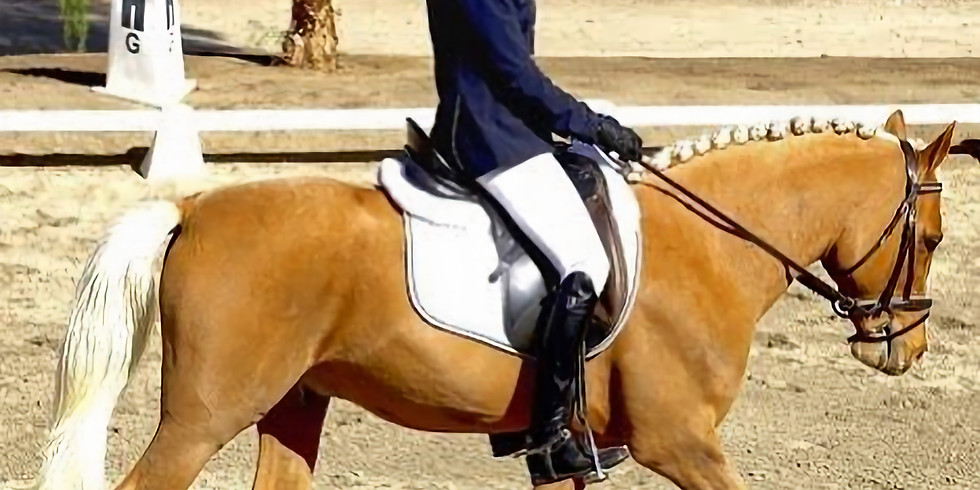 """""""No Bull"""" Working Equitation Level 1/Intro Schooling Show"""