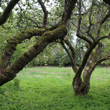 Preserving Nairn's orchards