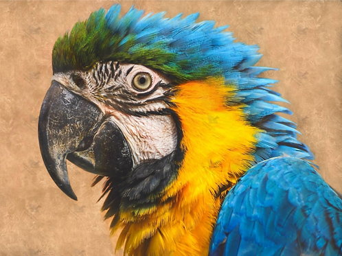 Diamond Dot Painting - Blue Yellow Parrot