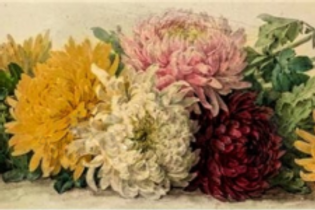 Diamond Dot Painting - Chrysanthemums