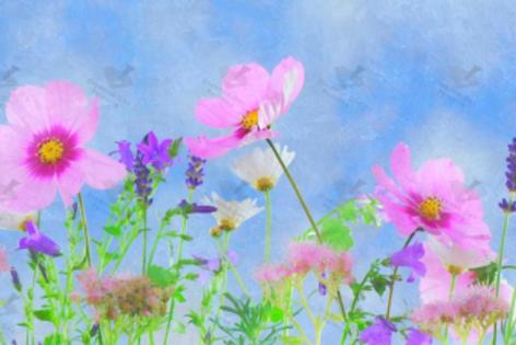 Diamond Dot Painting - Daisies & Lavender