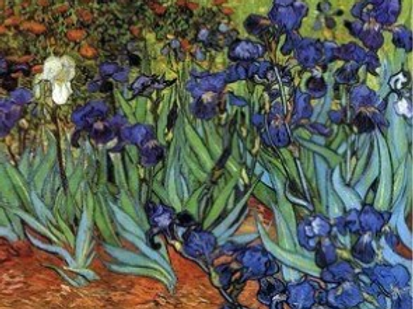 Diamond Dot Painting - Irises