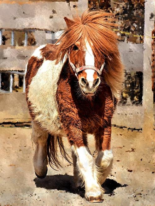 Diamond Dot Painting - My Little Pony