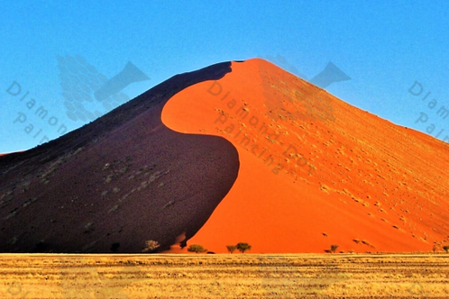 Diamond Dot Painting - Dune 45