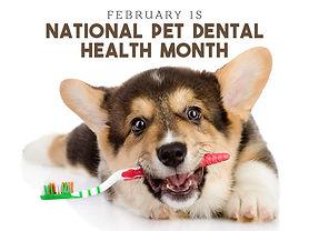 National-Pet-Dental-Health-Month.jpg