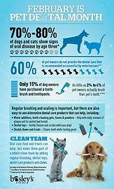 infographic- pet dental.jpg