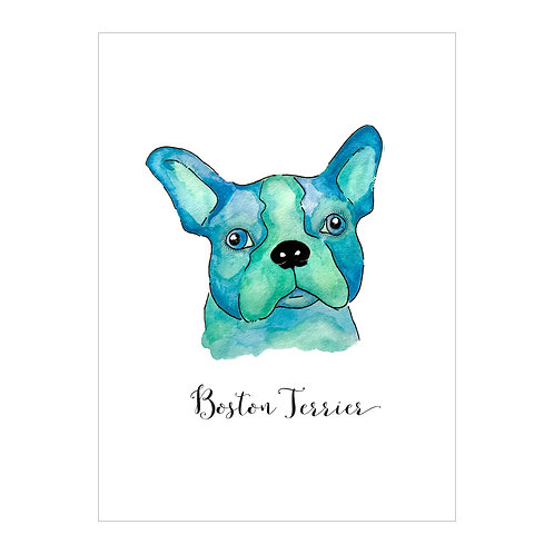 Boston Terrier Notecard