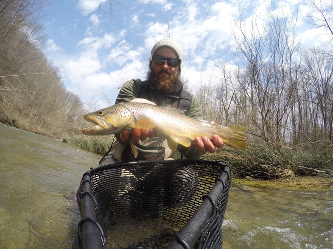 Queen City Guiding brown trout fishing
