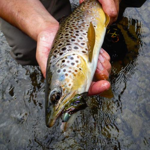 Queen City Guiding brown trout fishing jiggy sculpin