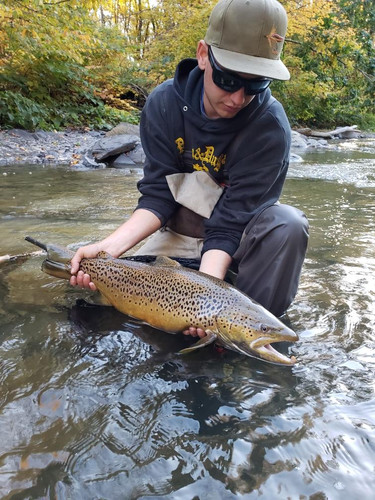 lake Erie brown trout_learn to fly fish
