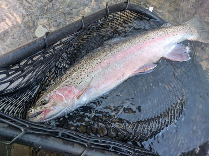 lake erie steelhead fly fishing_learn to