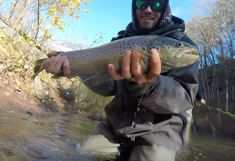 brown trout oak orchard ontario fly fishing