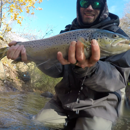 Steelhead and browns at oak orchard