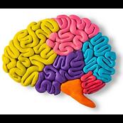 Main Brain.png